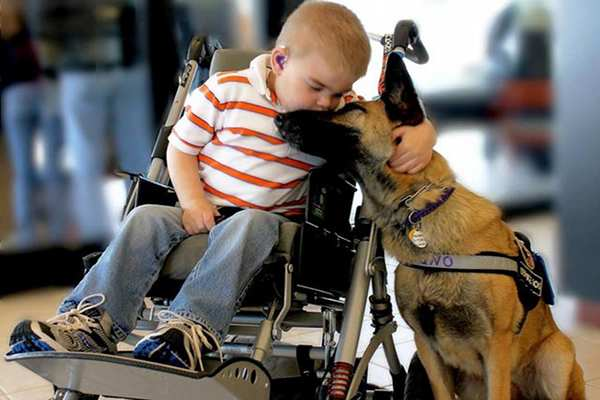 The Touching Story of a Sick Boy and His Rescue Dog