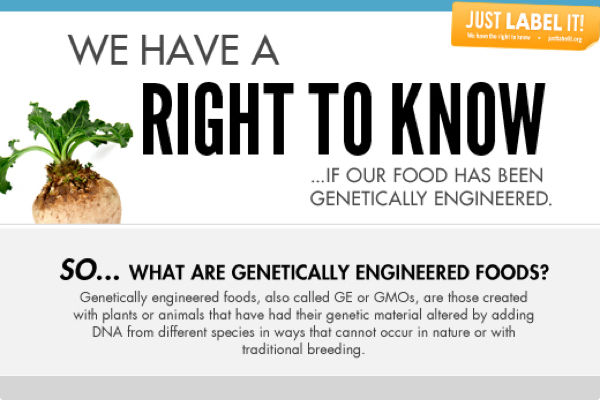 Infographic: What are GMOs?
