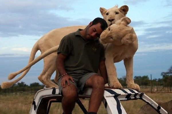 WATCH: Man Cuddles with Lions