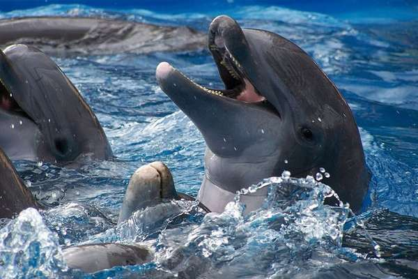 Swiss Lawmakers Support Ban on Dolphin Aquariums