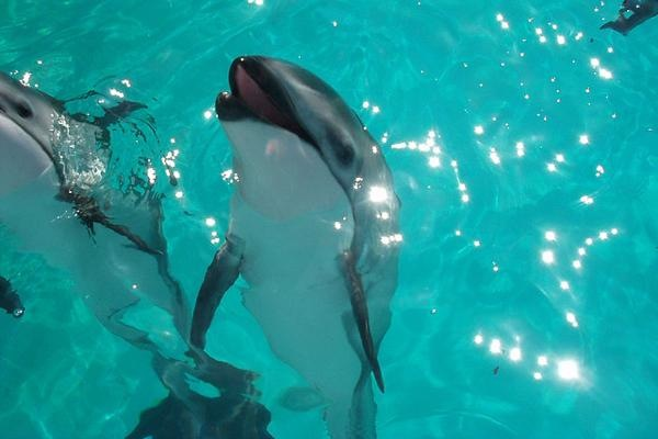 Heroin Overdose Blamed for Dolphin Deaths