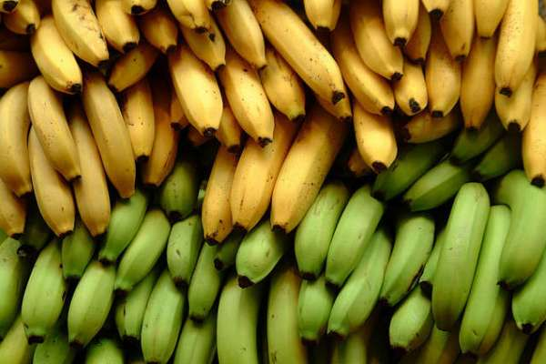 The Human and Environmental Impact of Bananas