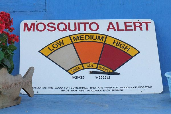 Quit Bugging Me! West Nile Warnings + The Best Natural Insect Repellents
