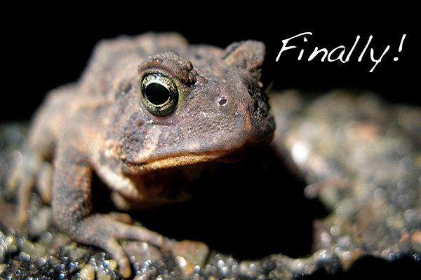 PETA India Subsidizes Virtual Frog Dissection Software