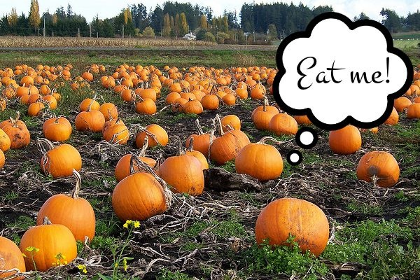 Pumpkins are for Eating: Health Benefits, Tips and Recipes