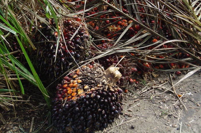 10 Scary Facts About the Palm Oil Industry