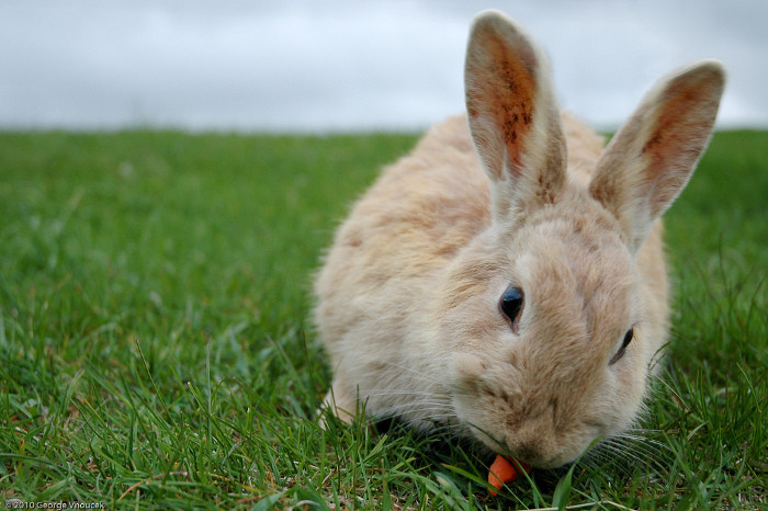 5 Surprising Products That Are Tested On Animals