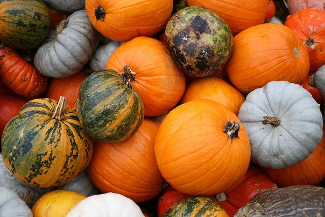 Eat Pumpkins