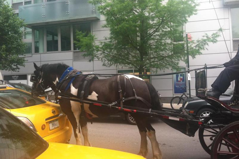 The Last Days of NYC's Horse-Drawn Carriage Empire are Here