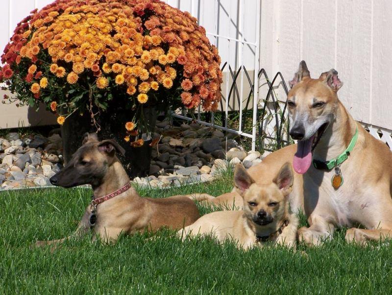 Greyhound Rescue of Idaho