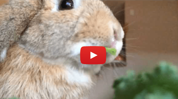 Rabbit Eating Greens in Slow Motion (VIDEO)
