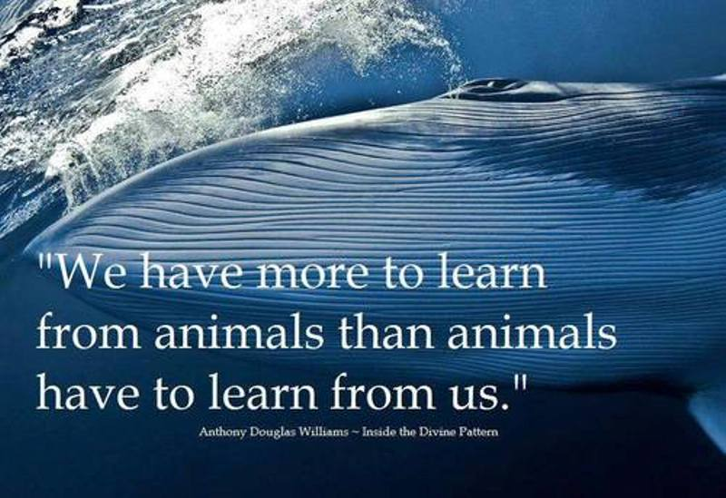 learn from animals