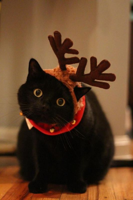 10 Adorable Animals that Are Totally Ready for Christmas (PHOTOS)