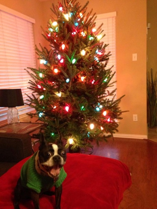 15 Adorable Animals that Are Totally Ready for Christmas (PHOTOS)