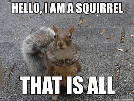 5 Reasons to Love Your Backyard Squirrels