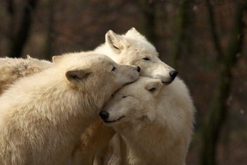 wolveswolves / Tumblr