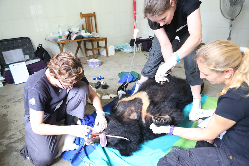 Animals Asia Vets Race Against the Clock to Save 130 Moon Bears