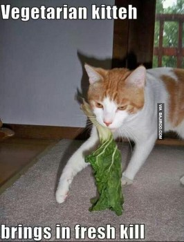 If Cats Were Vegan (Memes)