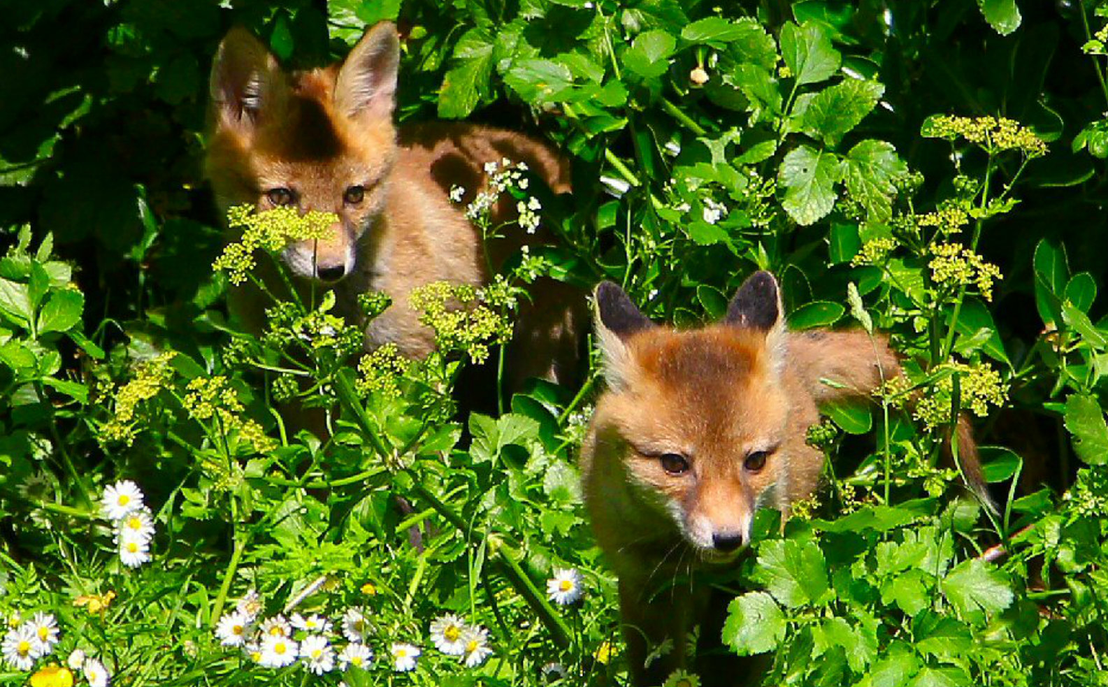 3 humane ways to protect your gardens and pets from wildlife one