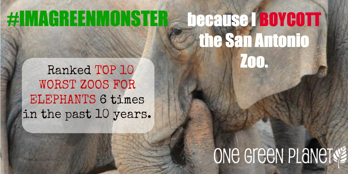EXPOSED! The San Antonio Zoo: One of the Worst Zoos in America