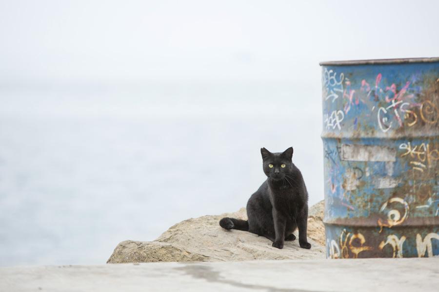 Jason Putsche Photography - Comm Cats 05