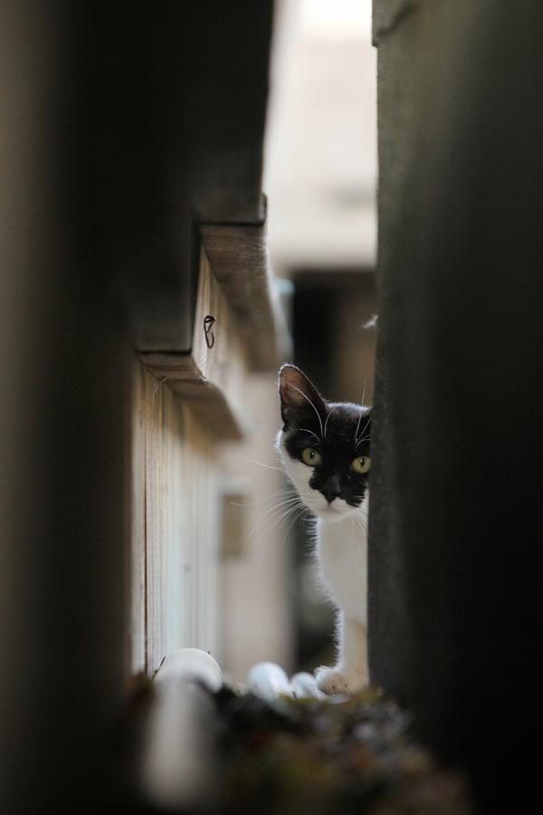 Jason Putsche Photography - Comm Cats 11