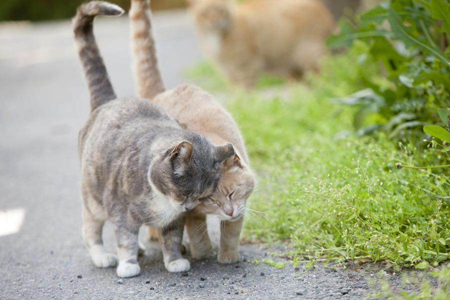 Jason Putsche Photography - Comm Cats 16