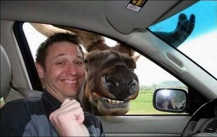 Most Incredible Photobombing Animals