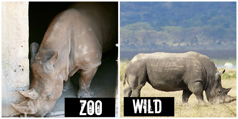 EXPOSED! The San Antonio Zoo: Cruelty, not Conservation!