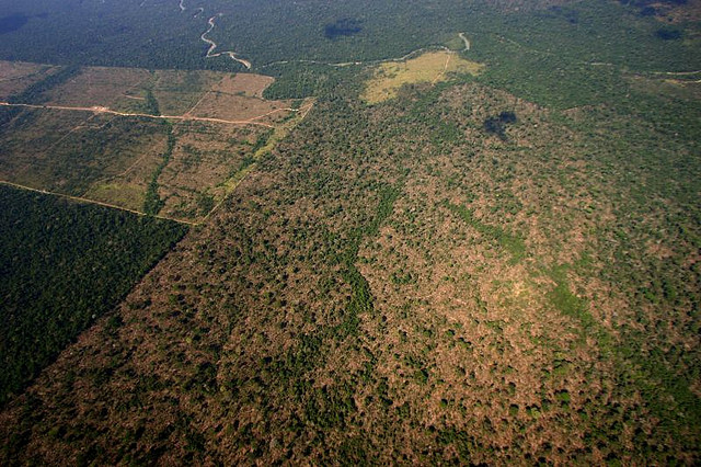 X shocking photos that illustrate deforestation