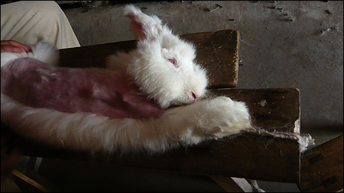 5 Facts You Need to Know About the Angora Wool Trade