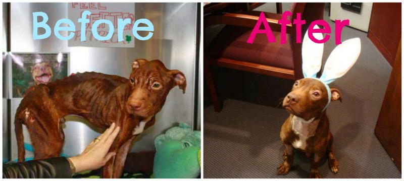Before/After Rescued Dogs