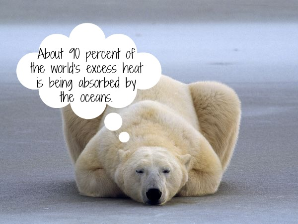 Sad Animals Climate Change
