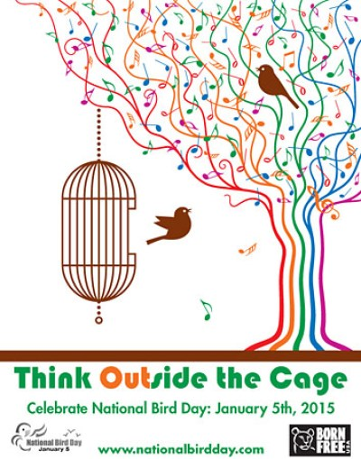 Consider the Plight of Captive Birds to Honor National Bird Day