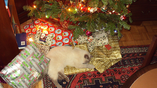 8 Times Cats Were More Excited About Christmas Trees Than You