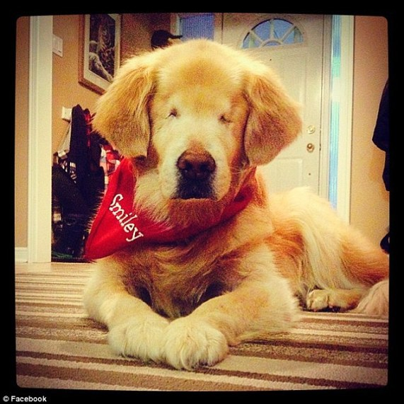 Even Though He Was Born Without Eyes, Smiley the Dog is the Best Therapy Dog Around