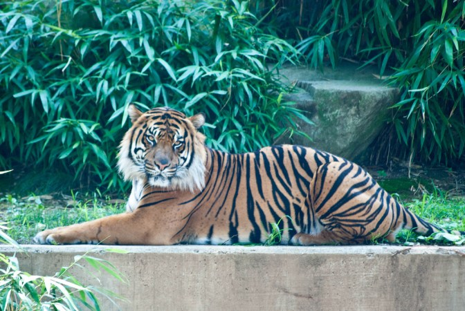 5 worst states for exotic animals