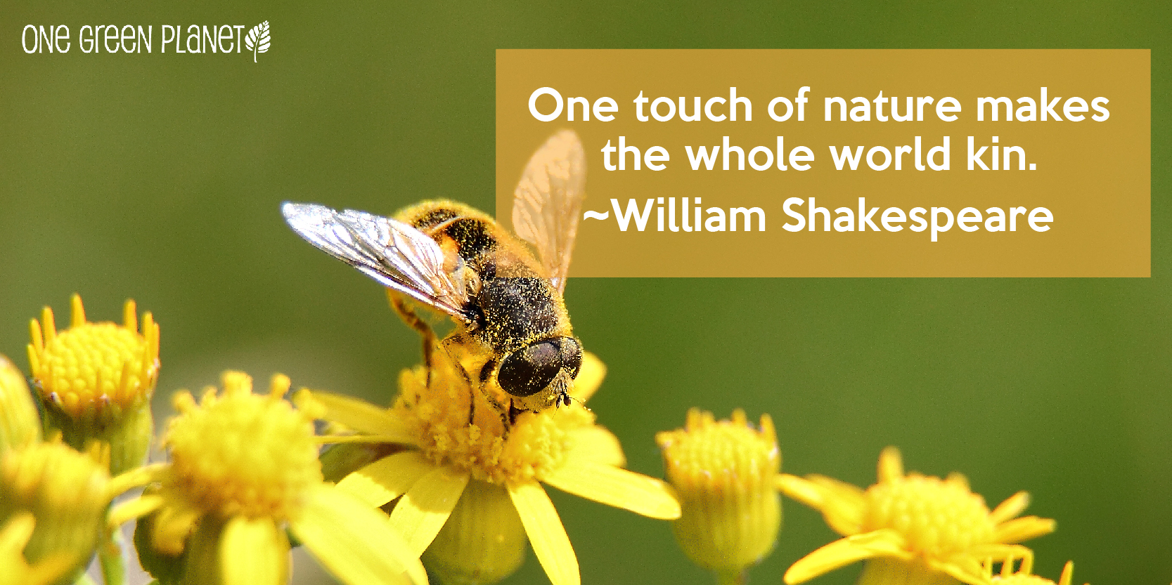 Quotes Nature 15 Quotes About Nature That Will Remind You Why We Need To Keep