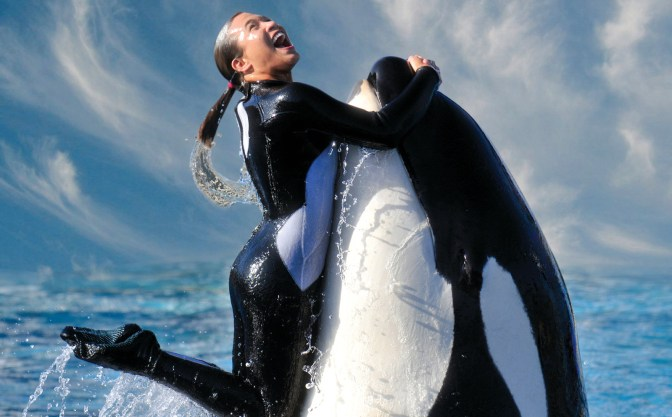 Empty the Tanks! SeaWorld's Comical Efforts to Redeem Their Reputation