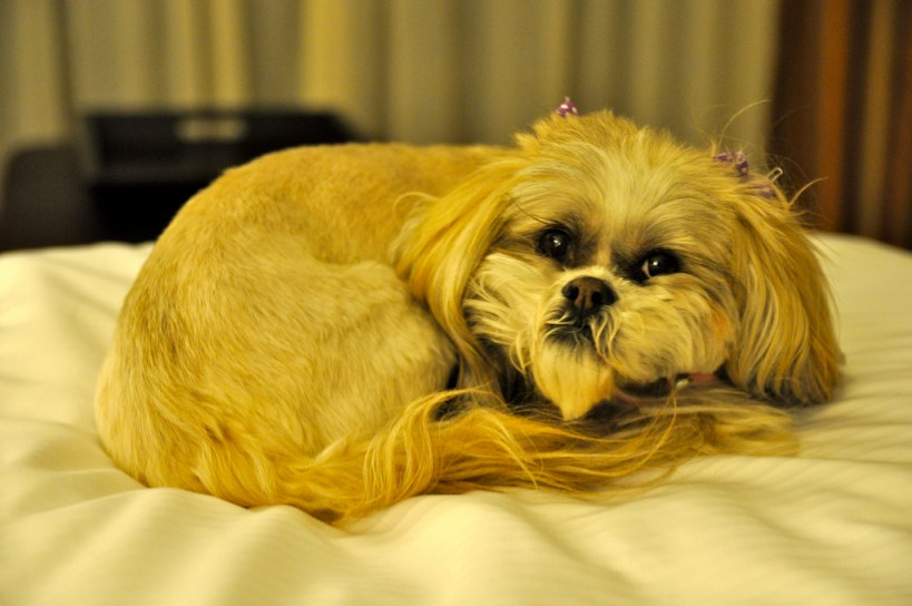 Many hotels have pet policies--be sure to check the policy before you make reservations!