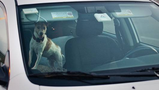 Here's What To Do When You See An Animal Trapped In A Hot Car
