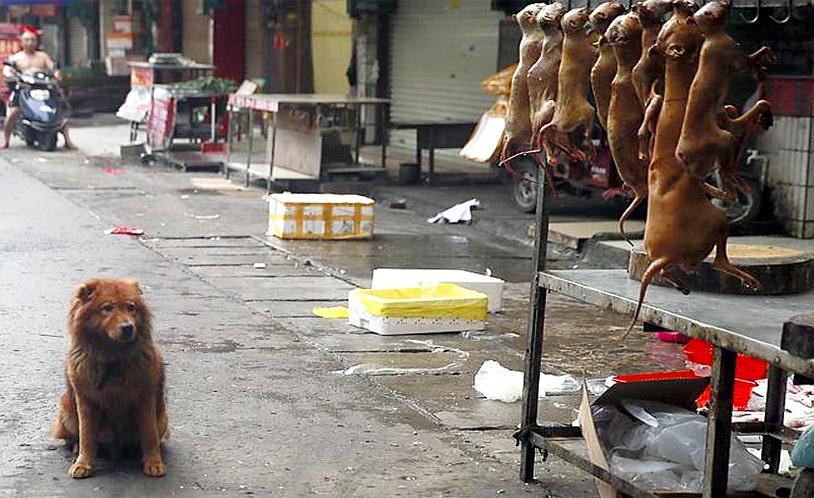 yulin-dogs-2