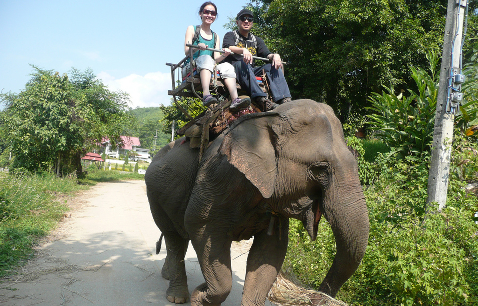 Think Elephant Rides are Cute? Here's Why You Should Reconsider