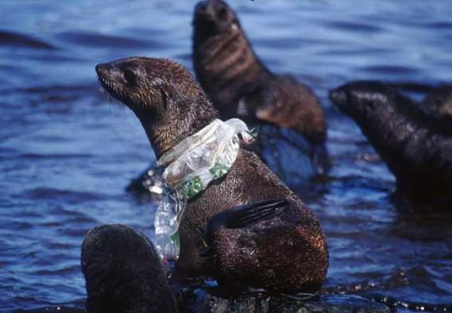 These animals are in danger from plastic pollution: here's how can you can help