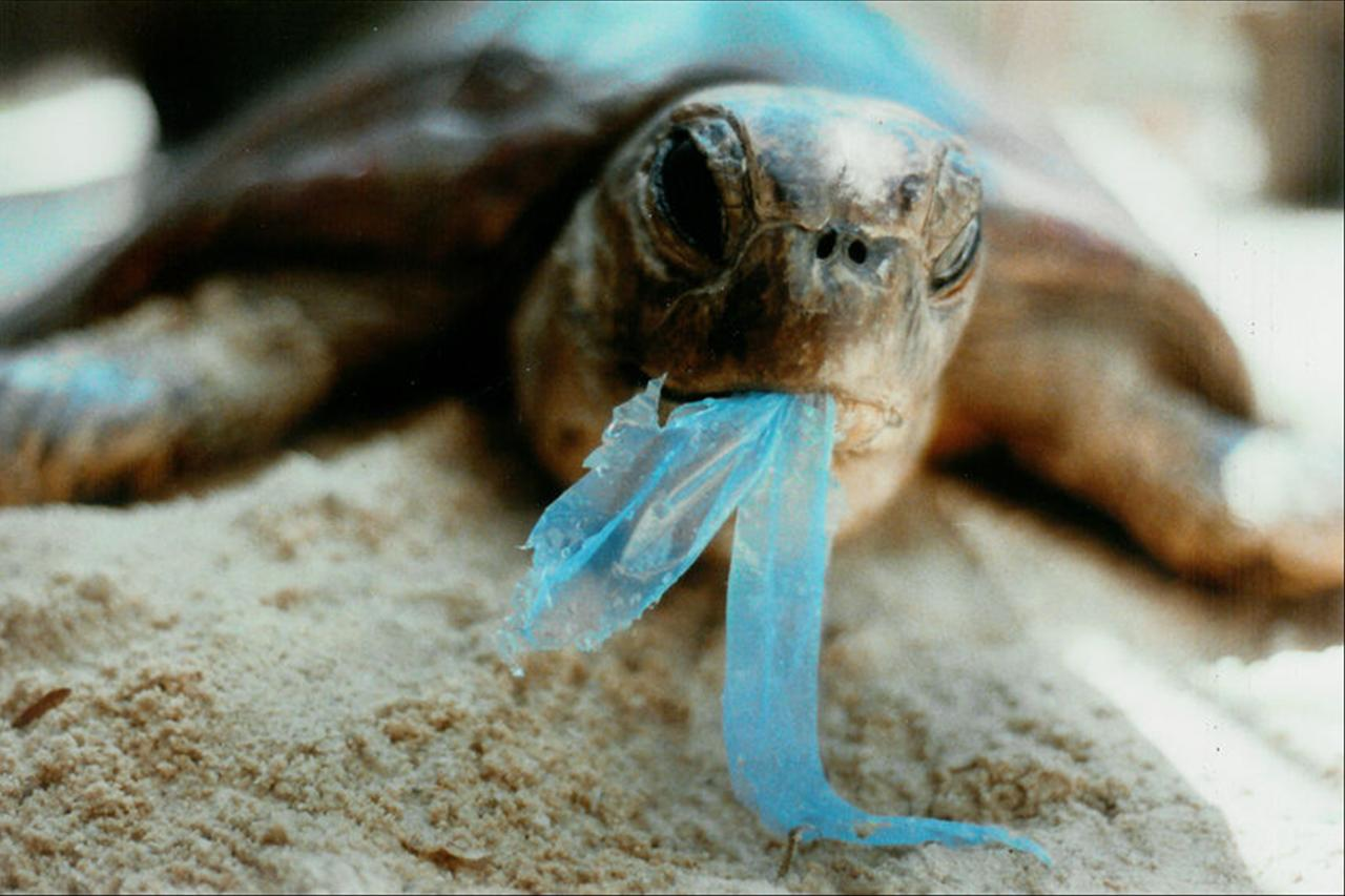 these animals are in danger from plastic pollution: heres how you can help