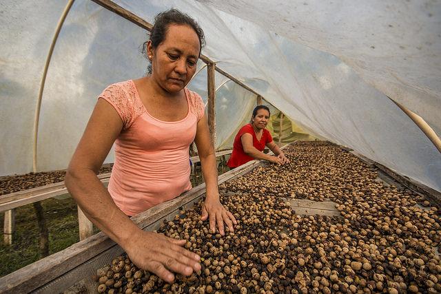Ramon nut processing