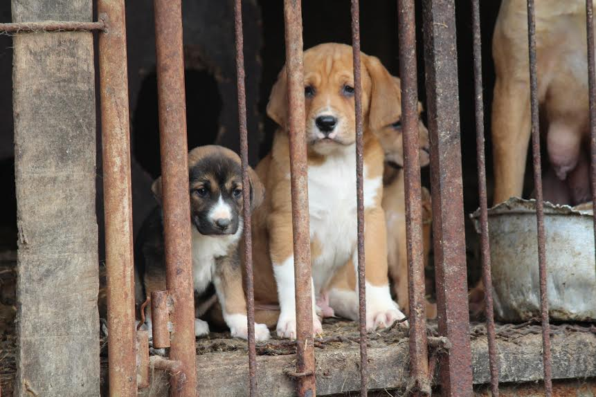 dog meat 1