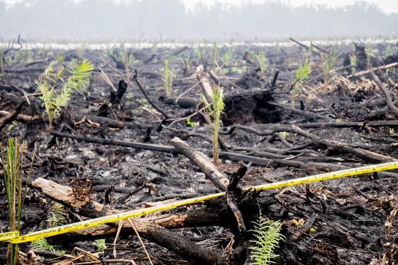 Burned Land Crime Scene in Central Kalimantan