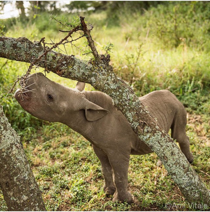 This Beautiful Picture of a Baby Rhino Reveals Exactly How Important These Animals Are to Our Planet
