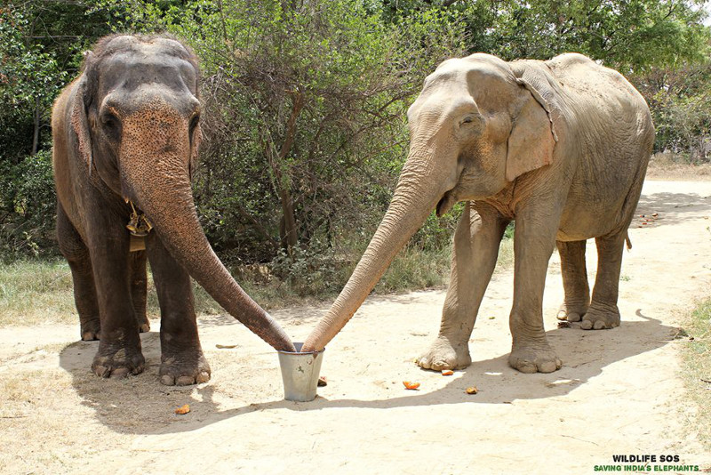 Stunning Picture of Two Elephant Friends Shows Us Just How Emotionally Intelligent These Animals Really Are